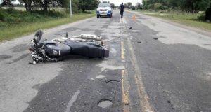 Accidente vial, Animales sueltos e la ruta